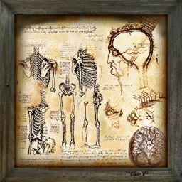 File:Decorative Painting anatomical.png