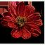 Tw3 beggartick blossoms
