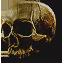 Tw3 skull
