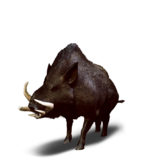 Tw3 journal wild boar