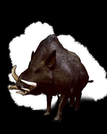 Wild Boar Witcher Wiki Fandom