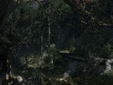 Deadwight Wood