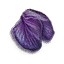 Tw3 hellebore petals
