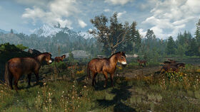 Skellige wild horses