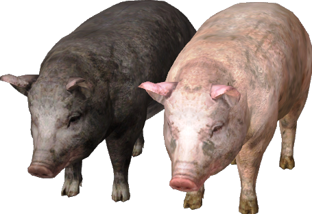 File:The witcher pig.png
