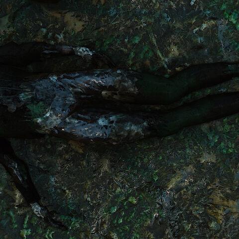 Ambros' body