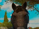 Undvik horse blinders