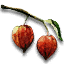 File:Tw3 winter cherry.png