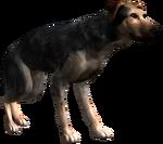 Bestiary Dog full