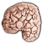 Substances Drowners brain