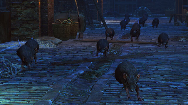 File:Rats in Novigrad.jpg