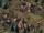Abbot's Farm