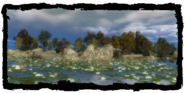 Places Black Tern Island 2