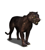 Tw3 journal panther