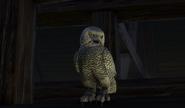 Owl Philippa
