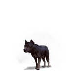 Tw3 journal dog