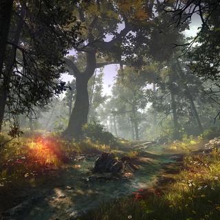 Path through forest full of <a href=
