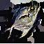 Tw3 fish