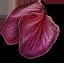 Tw3 ginatia petals
