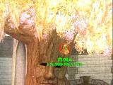 Flora - L'Albero della Vita