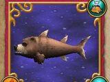 Pesce: Orsocuda