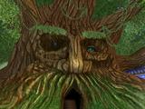 Bartleby, the Grandfather Tree