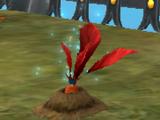 Κόκκινος Μανδραγόρας