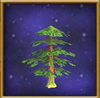 Small Evergreen Tree