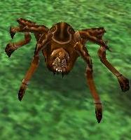 Brown Spider Wizard 101 Wiki Fandom Powered By Wikia
