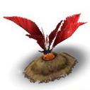 Red Mandrake Harvest