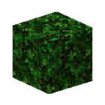 Jungle Leaves 1