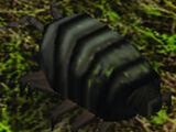 Meatbug