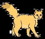 Lwie Oko Kociak