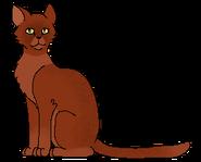 Redstar Leader