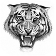Logo-tigerclan