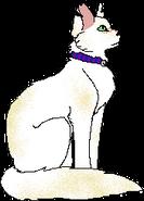 Pixie (kot domowy)