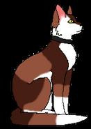 Mitzi Kittypet