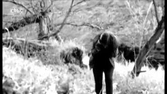 Wolfblood (Laura Palmer)