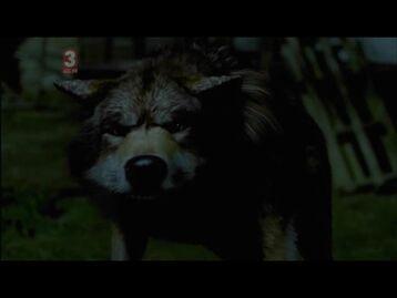 Danielwolf