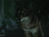 Wolf Forms / Gallery