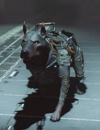 Kampfhund 1961