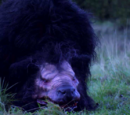 Werewolf Beasts (Wild Country)