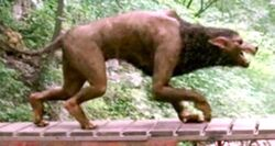 BeingHumanJoshWerewolfForm