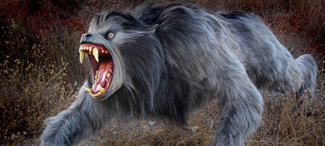 File:Kessler wolf.jpg