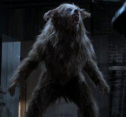 Jordan as Werewolf