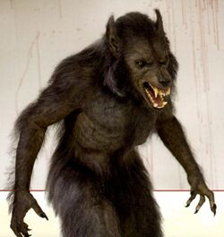 WoodsCabin werewolf