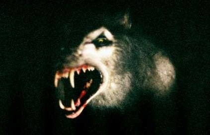 File:Male werewolf Ginger 2.jpg