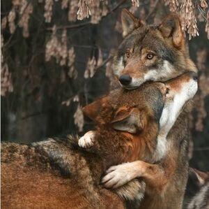 Dante hug