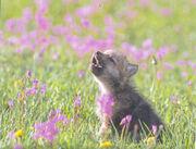 Wolf3w