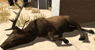 Bull carcass
